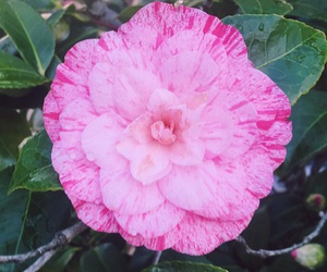 flower, nature, and petals image