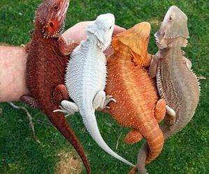animal, dragon, and lizard image