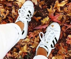 autumn, fall, and adidas image