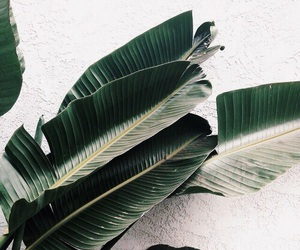 plants, green, and leaves image