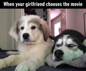 dog, funny, and awesome image