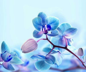 blue, flower, and beautiful image