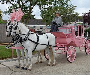 carriage, horse, and pink image