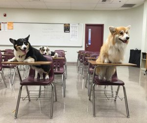 school and dog image