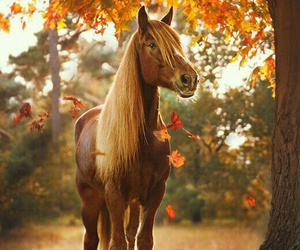 horse, autumn, and animal image