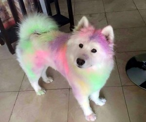 dog, animal, and colors image