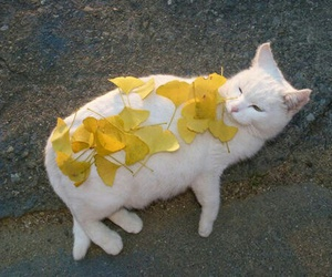 cat, yellow, and animal image