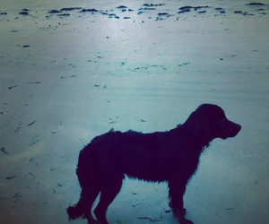 dog, puppy, and sea image