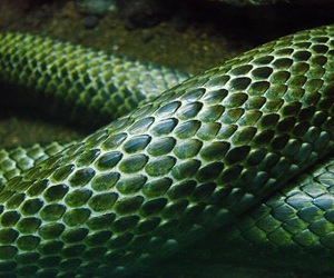 green, snake, and aesthetic image