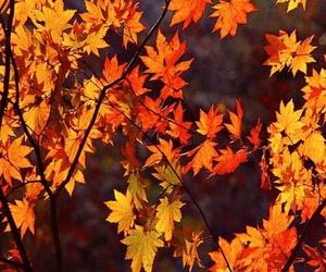 autumn and orange image