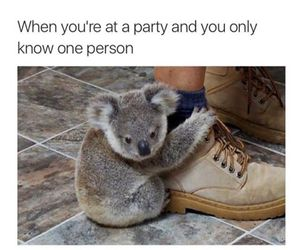 funny, party, and Koala image
