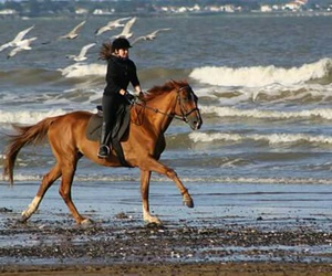 beach, equestrian, and freedom image