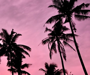 pink, palms, and sky image