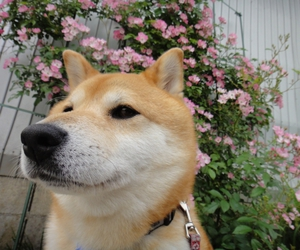 dog, flowers, and pale image