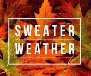 fall, autumn, and sweater weather image
