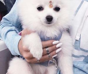 dog, white, and nails image