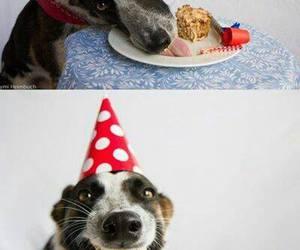 dog, birthday, and cake image