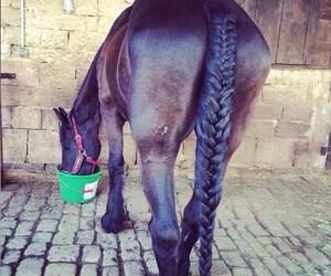black, horse, and frison image