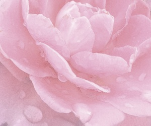 flower, pastel, and pink image