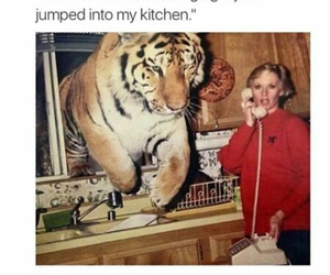 funny, tiger, and lol image