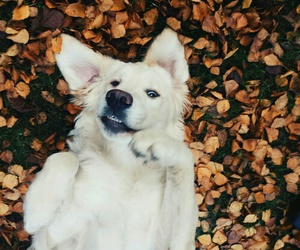 dog and autumn image