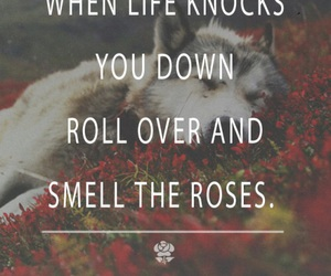 quotes, rose, and life image