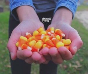 tumblr, autumn, and fall image
