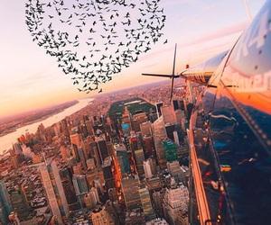 city, bird, and heart image