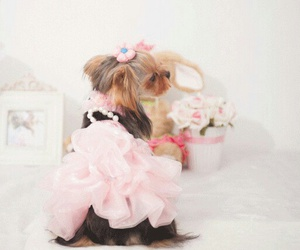 dogs, pets, and pink image