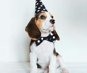 animal, bow, and dog image