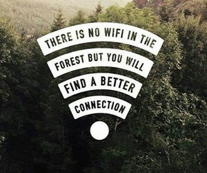 forest, nature, and wifi image