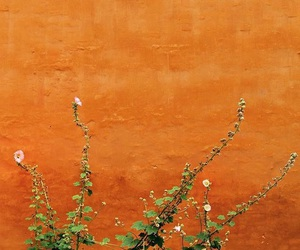 brown, colour, and copenhagen image
