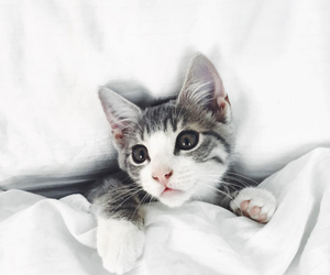 bed, cat, and kitten image