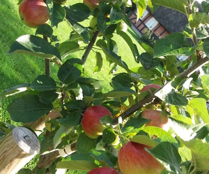 appletree and nature image