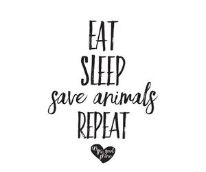 vegan and animal image