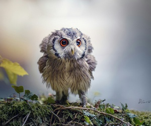 owl, sweet, and cute image