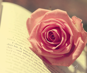 rose, book, and flowers image