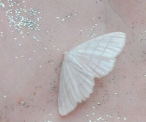 butterfly, aesthetic, and pale image