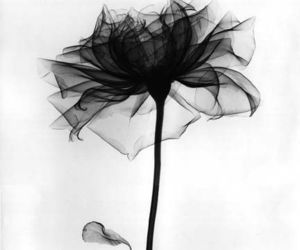 black, photo, and flower image