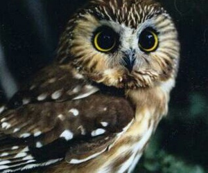 owl, pretty, and huge eyes image