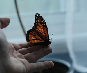 butterfly, hand, and photography image