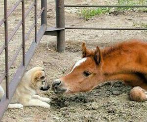 horse, dog, and animal image