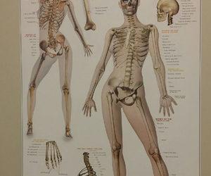 funny, bones, and lol image
