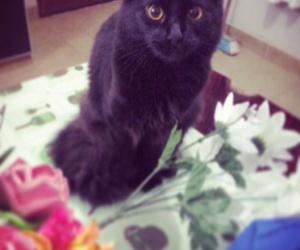 black, Gatos, and heart image
