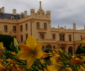 castle and flower image