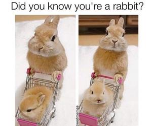 animal, rabbit, and adorable image
