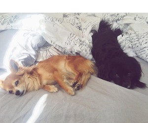 bed, dog, and dogs image