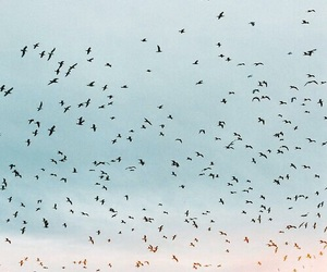 background, birds, and clouds image