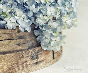 blue, blue flowers, and floral image