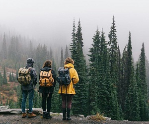 friends, travel, and forest image